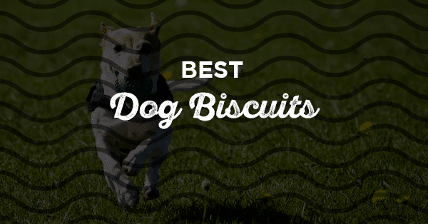 best dog biscuits