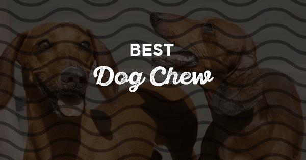 best dog chew