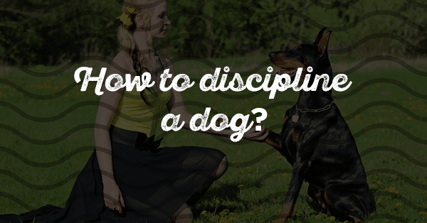 how to discipline a dog