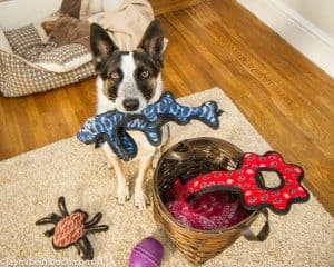 Best Dog Toys For Big Dogs
