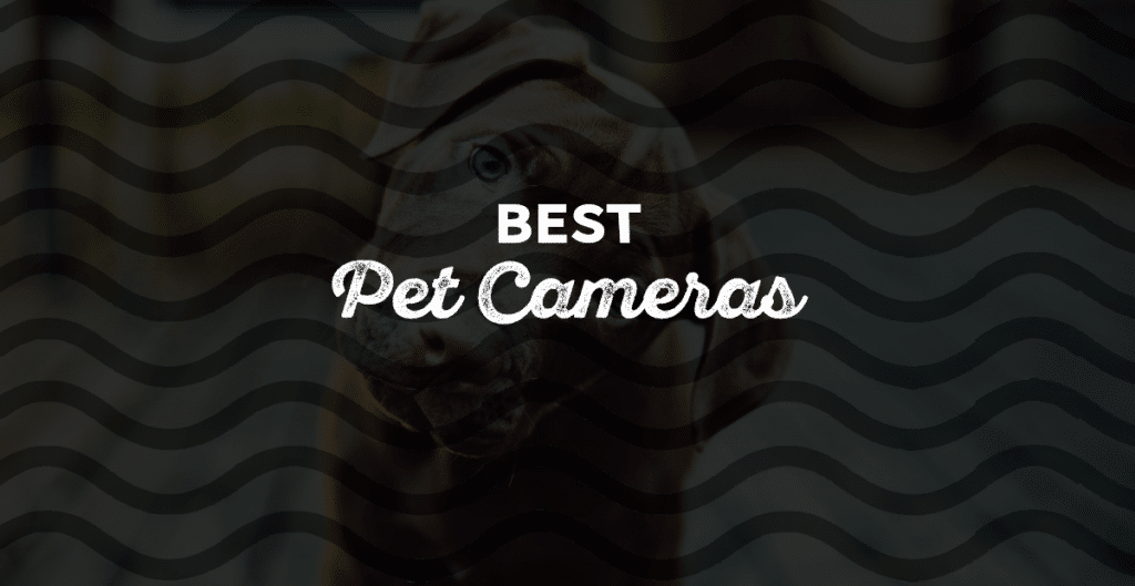 The Best Pet Cameras For Animals