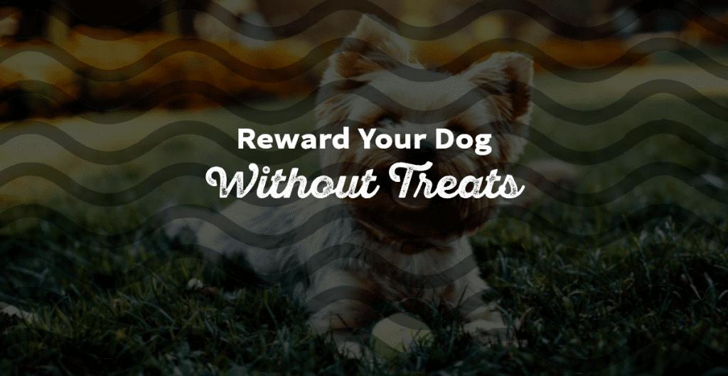 Reward a Dog Without Treats