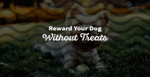 7 Ways to Reward Your Dog (without Using Treats)