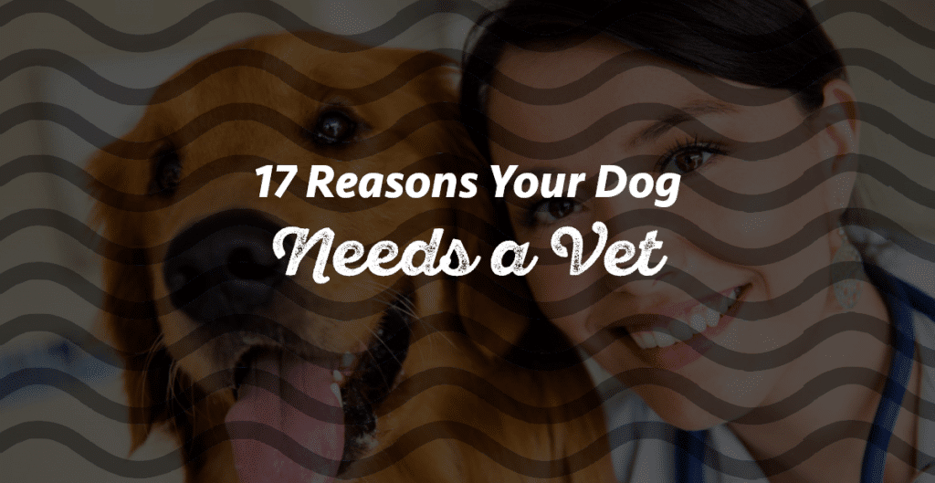Signs Your Dog Needs To Go To The Vet