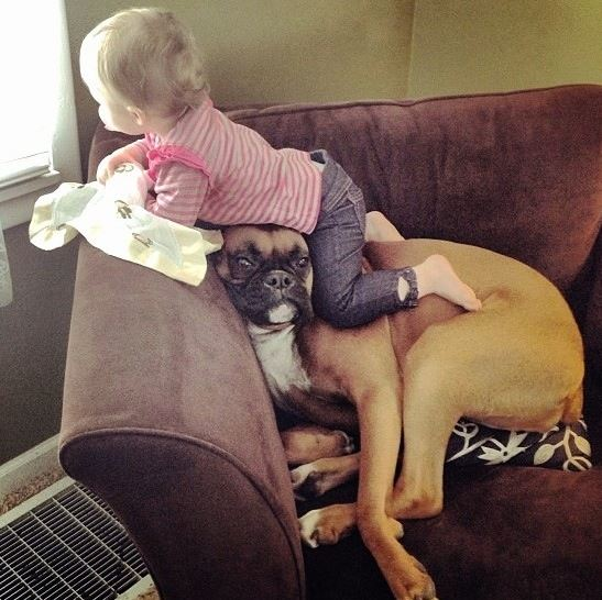 Boxer and kid