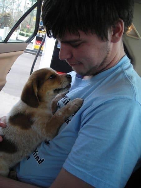 Husky Beagle Mix