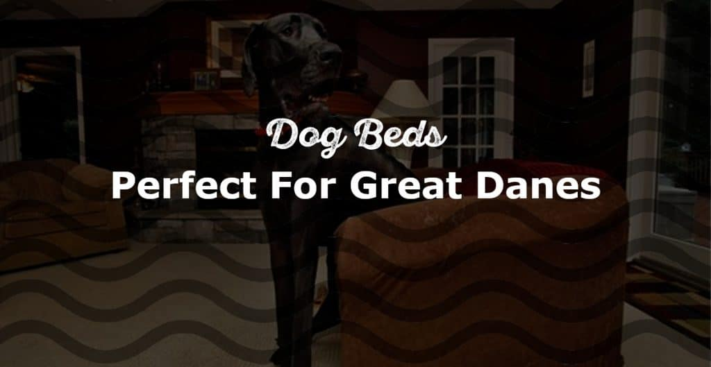 Dog Beds For Great Danes