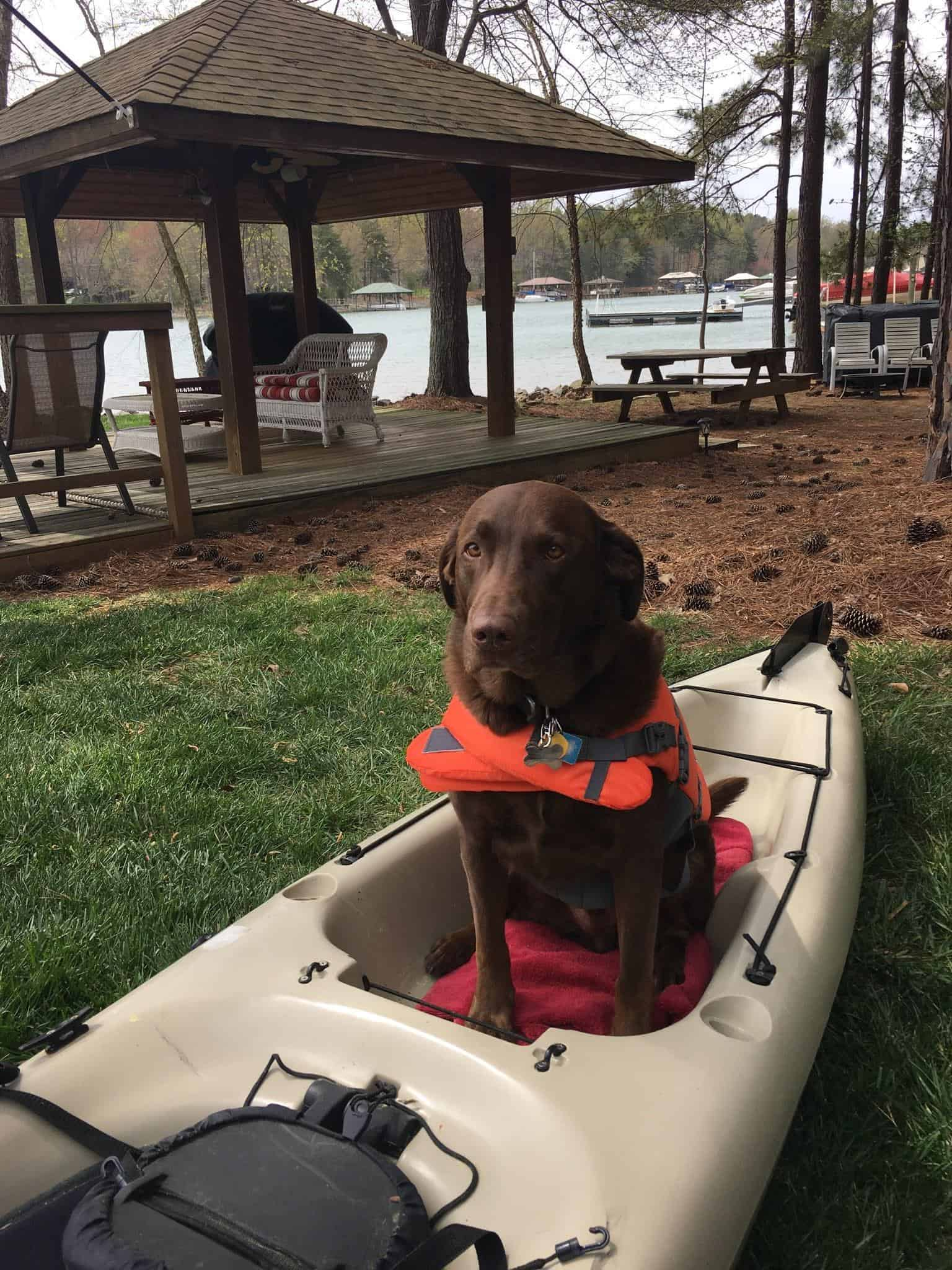 dog in kayak on land