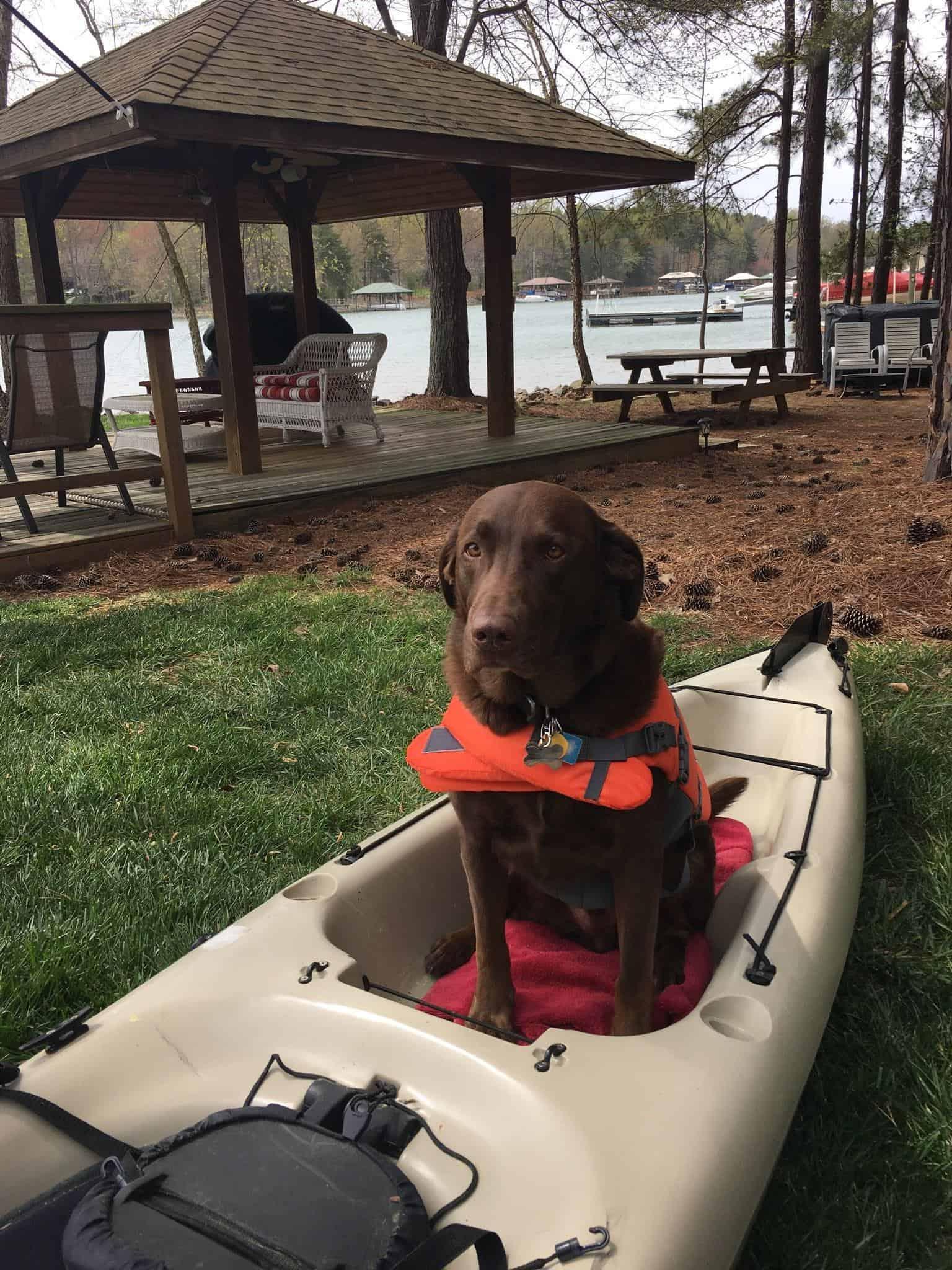dog in kayak on land