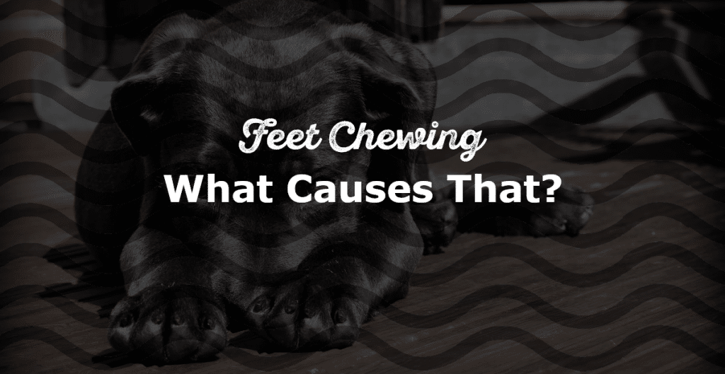 All About Feet Chewing