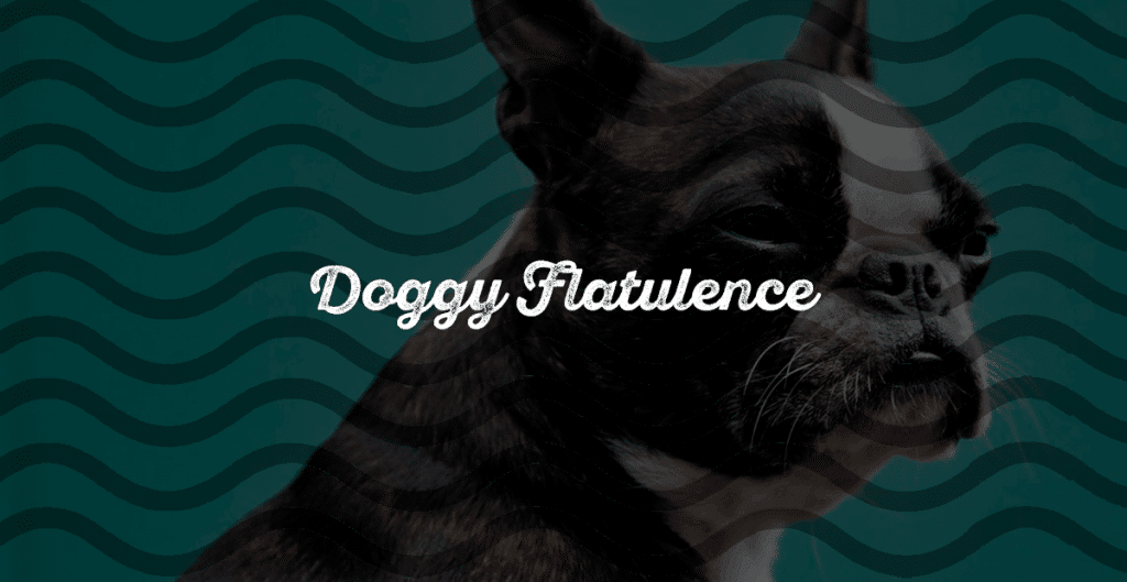 Doggy Flatulence