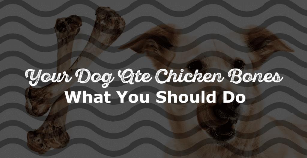 Dog Ate Chicken Bone
