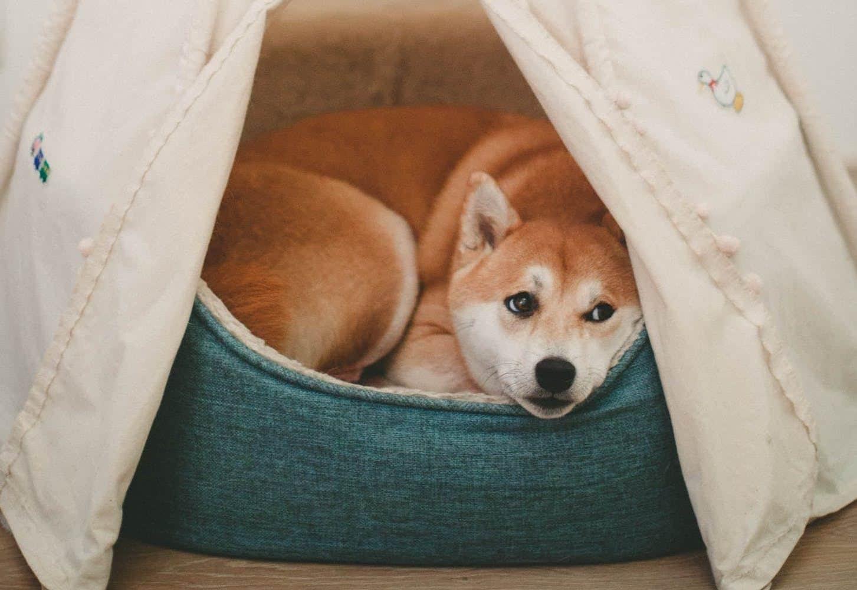 Bagel Dog Beds