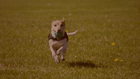 Tips And Training For Dogs
