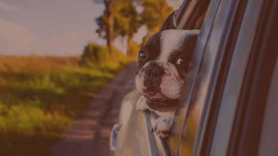 Travel Gear For Dogs