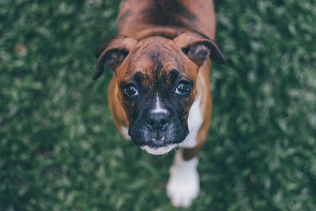 Has Your Dog Eaten Something Toxic? Here Are The Signs 2
