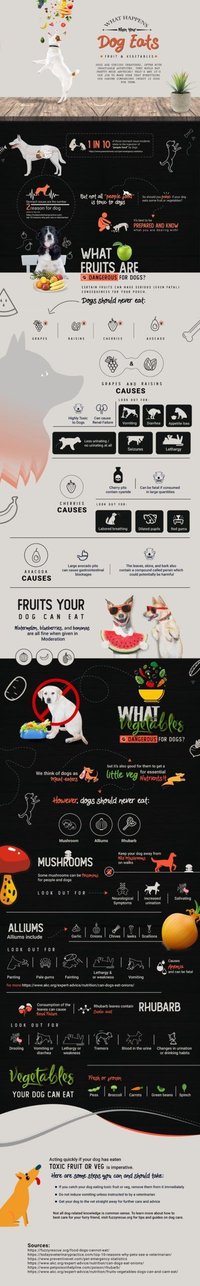 Has Your Dog Eaten Something Toxic? Here Are The Signs 3