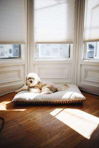 Orthopedic Dog Beds For Large Breeds