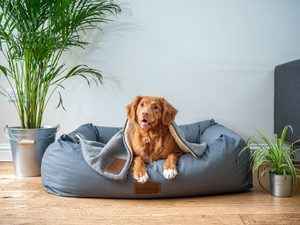 Cooling Blanket For Dogs
