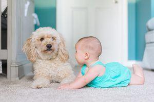 Carpet Shampoos To Remove Dog Urine